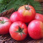 トマトの冷凍保存はまるごとで!3つの素敵なことがおこるから!